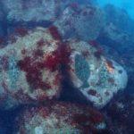 ヒラメ 水中生物